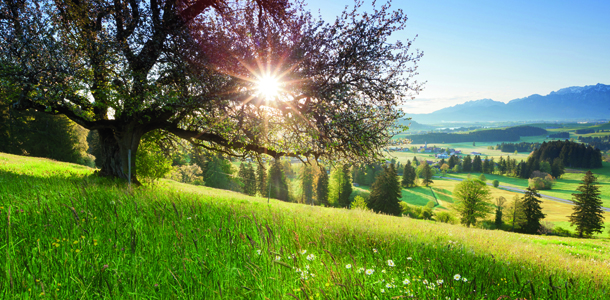 """""""backlight view through apple tree, summer meadow in bavaria, germany"""""""