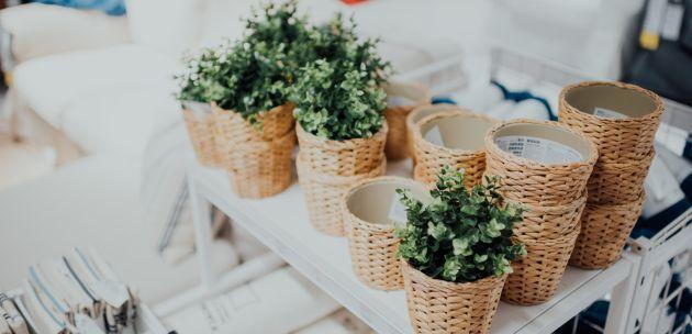Kako uzgojiti i spriječiti ugibanje začinskog bilja?