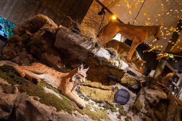 centar-za-posjetitelje-velike-zvijerii-2